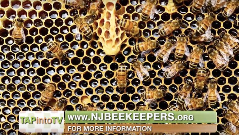 beekeepers.png