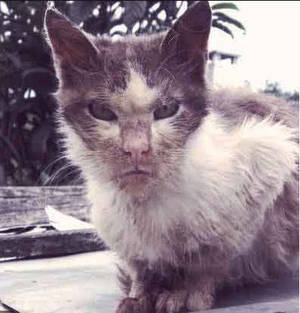 Stray Cat with Rabies Discovered in South Brunswick