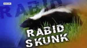 Rabid Skunk in Plainsboro
