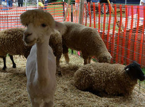 It's On!  the Middlesex County Fair to Return in August