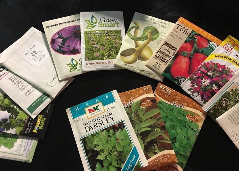 Proper Storage Extends the Life of Leftover Seeds
