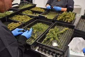 Hillsborough Bans  Marijuana Retail Stores, Farming, Warehouses