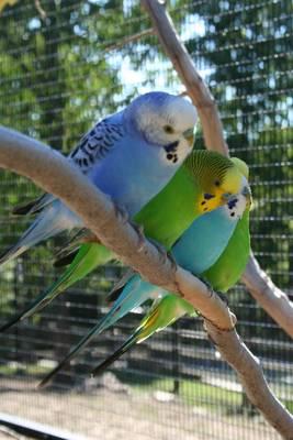 Turtle Back Zoo, Joseph N. DiVincenzo, Essex County Parks, Grass Parrots