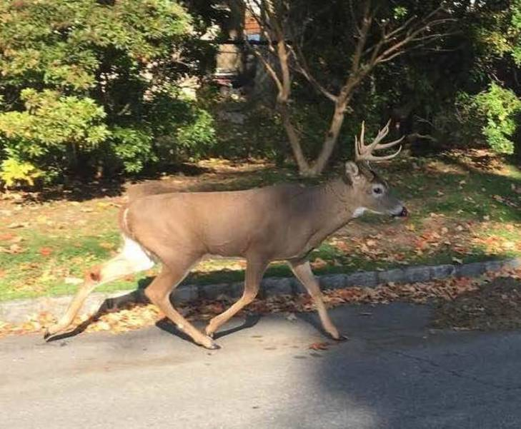 Best Times To Deer Hunt 2020 Union County Deer Hunt 2020: Freeholders OK Shotgun, Bow Hunts in