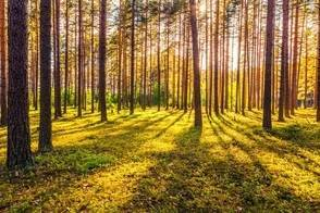 How to Make a Difference, One Tree at a Time