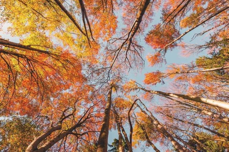 Middlesex County and Monroe Township to acquire 76 acres of woods
