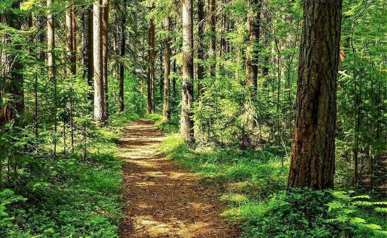 Take a Walk or Bike on the Nature Side: 20 miles of New Trails Coming to BurlCo