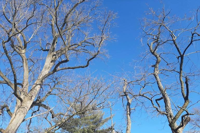 Best crop 49b83a9ff614a11ae57d 2e4b5f668f191c40521d trees