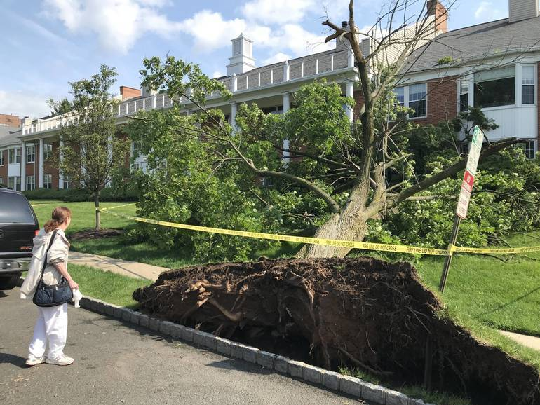 uprooted tree in westfield