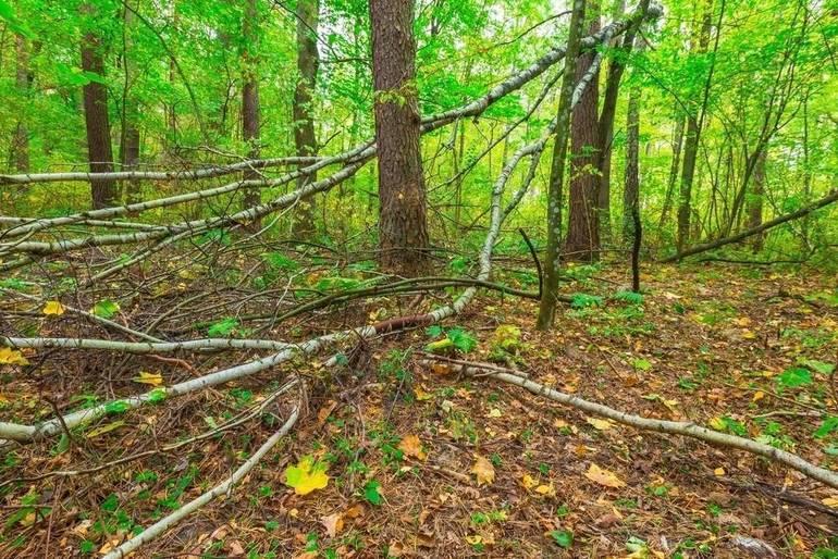 Deer Culling Program to Begin Thursday at Hilltop Reservation