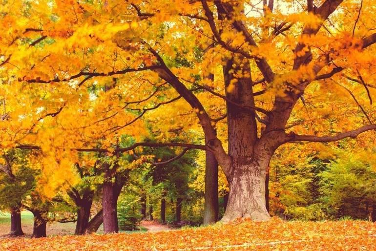 Explore the Fall Foliage at Crystal Lake Park On Saturday
