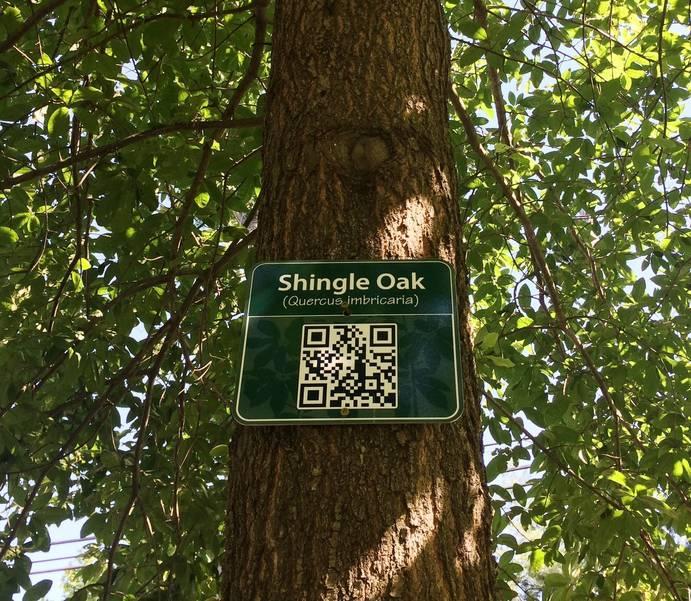 Tree Trail Echo Lake Park.JPG