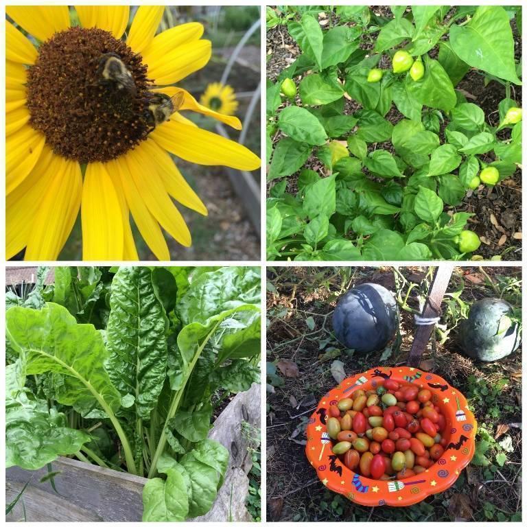 UC Means Green garden collage.jpg