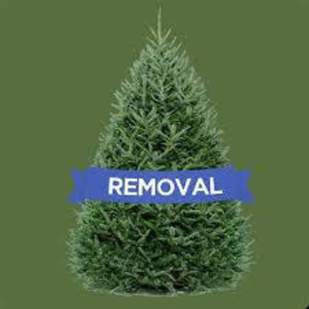 Christmas Tree Pickup in Madison Ends Jan. 29