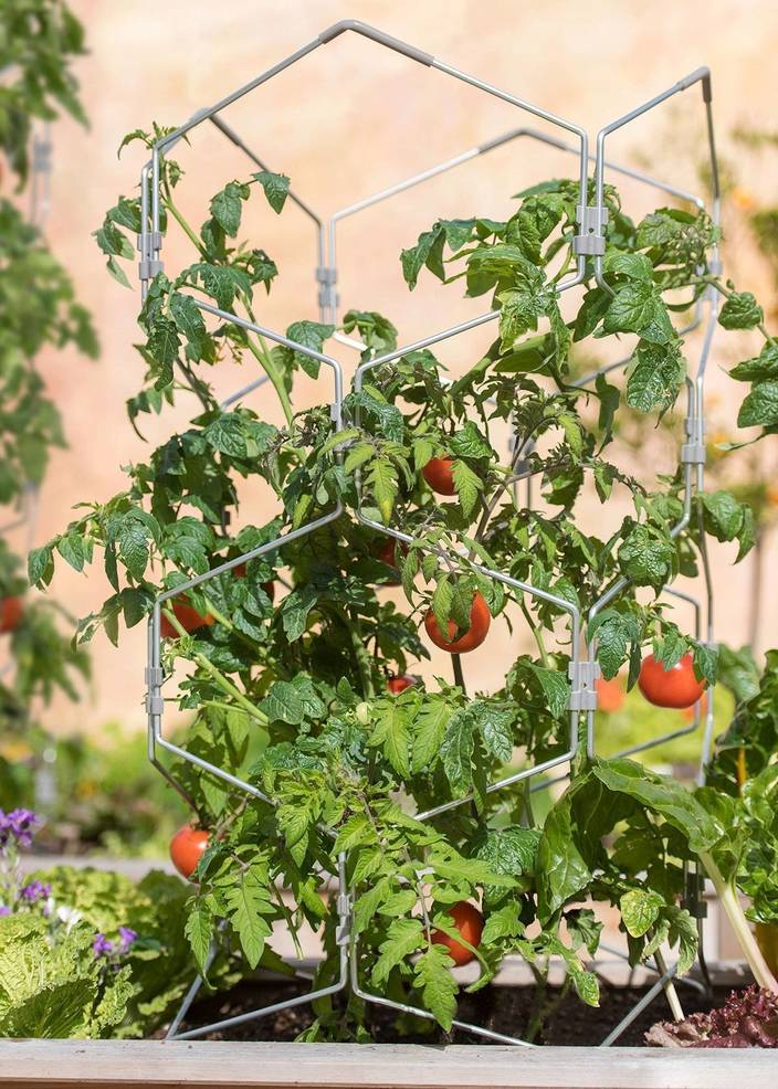 Best crop 086cac6d1fc7662cac84 2f5427b7bee5e3a46650 vertex tomato support photocredit gardenerssupplycompany
