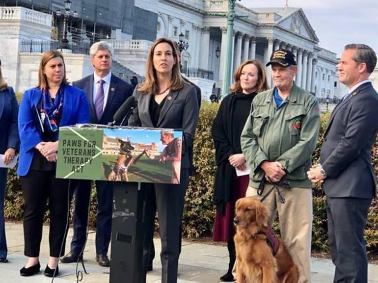 vets dogs.jpg