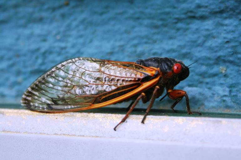 Best crop 6dac690448c710d49612 fecb59d7f0d940bb1c6d w cicada carpien