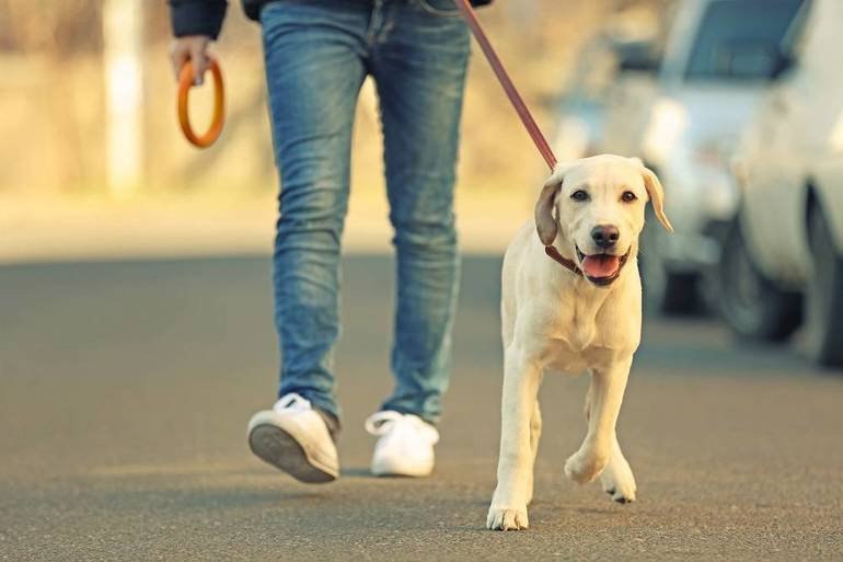 Rabies Clinic for Madison Residents; Dec. 5