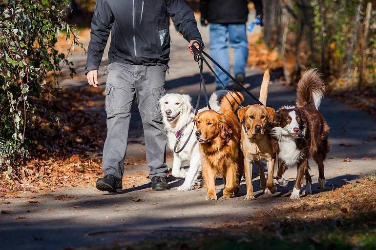 Robbinsville's The Healthy Animal Finding Forever Families at Dog, Cat Adoption Events