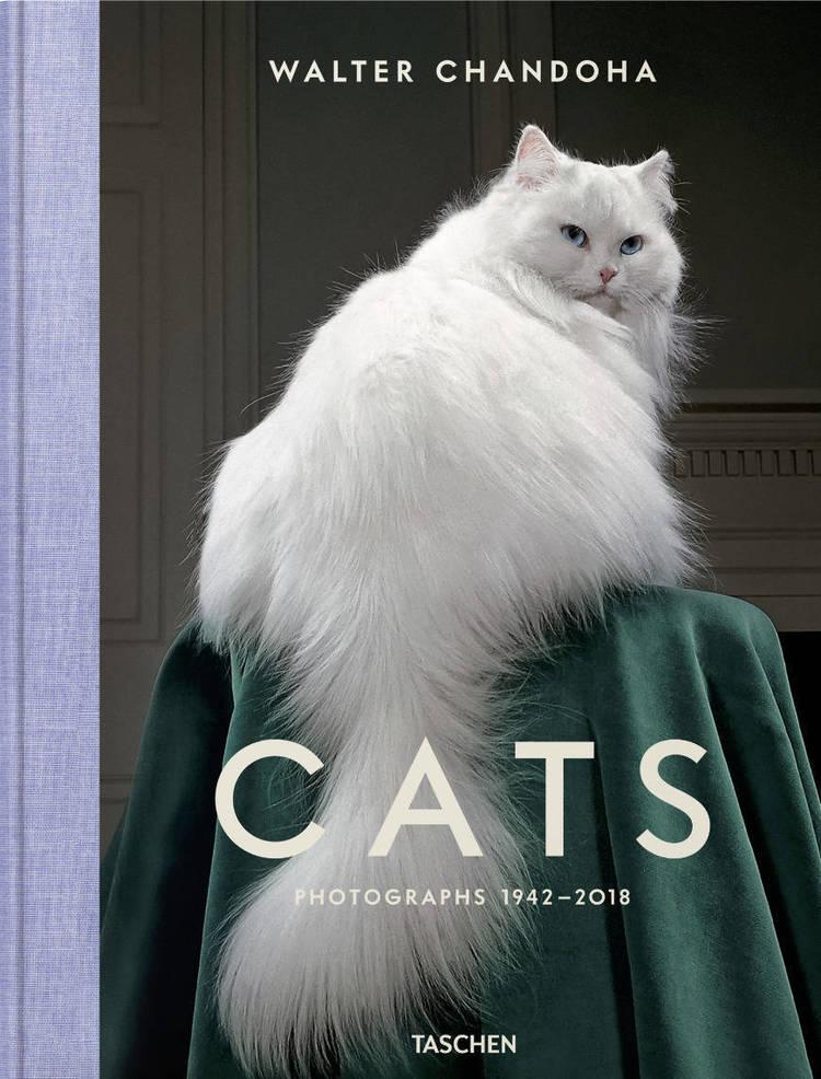 Walter Chandoha: Cat .png