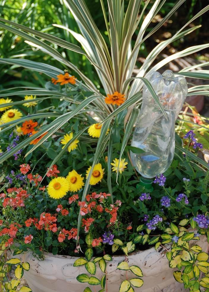 Best crop bbf9df18b20a60010252 07578d6d9a8f015e0607 water bottle irrigation photo credit melinda myers  1