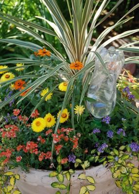 Carousel image b071ead4b4adb9a8be2e e1f1cb01b111d2de8e7b 123ff04cc2e970c707d6 07578d6d9a8f015e0607 water bottle irrigation photo credit melinda myers  1