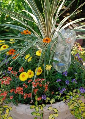Carousel image e4eaa805ff1e1dd916c1 07578d6d9a8f015e0607 water bottle irrigation photo credit melinda myers  1