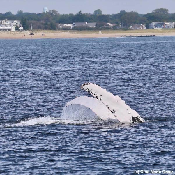 whalesginagreer-2.jpg