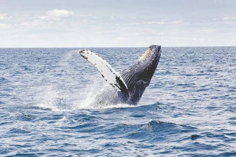 Red Bank's Navesink Maritime Heritage Association Presents: Whale Watching Tours on the Seastreak