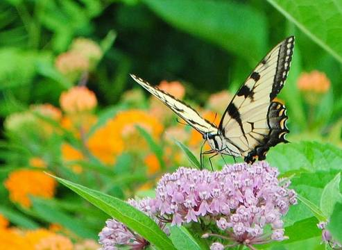 Top story 07ac3f363e6500c92e0f mini magick20190315 16939 18yb6zo